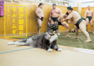 """Moru and Mugi, the Sumo Stable Cats"""